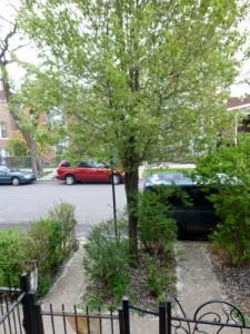 More Nance Klehm's 'parkway'